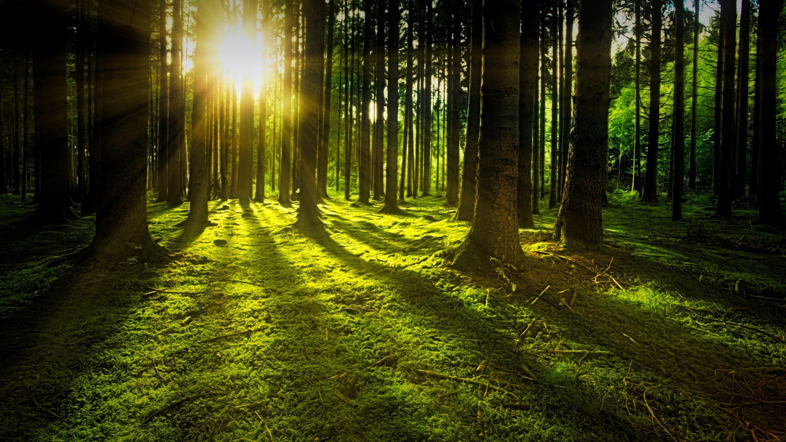 Leasing maszyn leśnych – harwesterów, forwarderów i in.